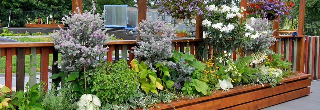 garden design exeter - Garden